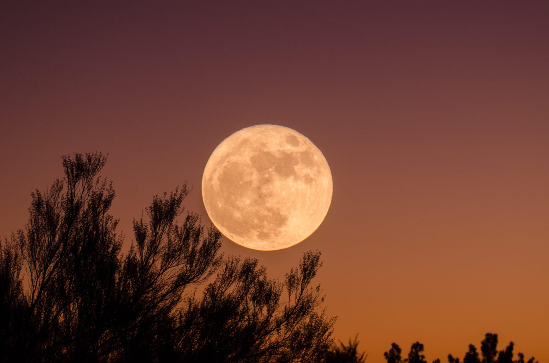 秋の夜長にぴったりの季節限定茶「月に咲く」